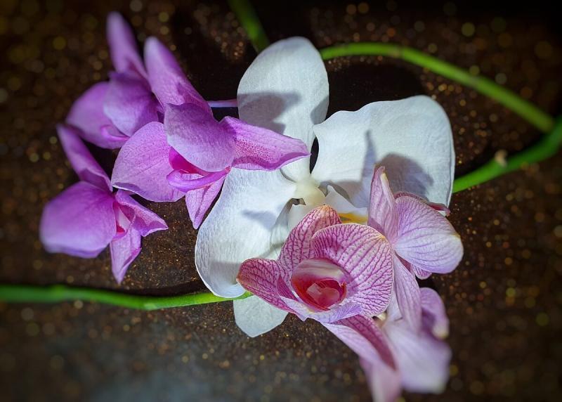 Почему орхидея так быстро отцветает