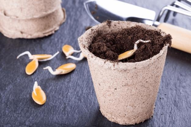 Чтобы рассада была крепкой и здоровой: 10 ошибок при выращивании