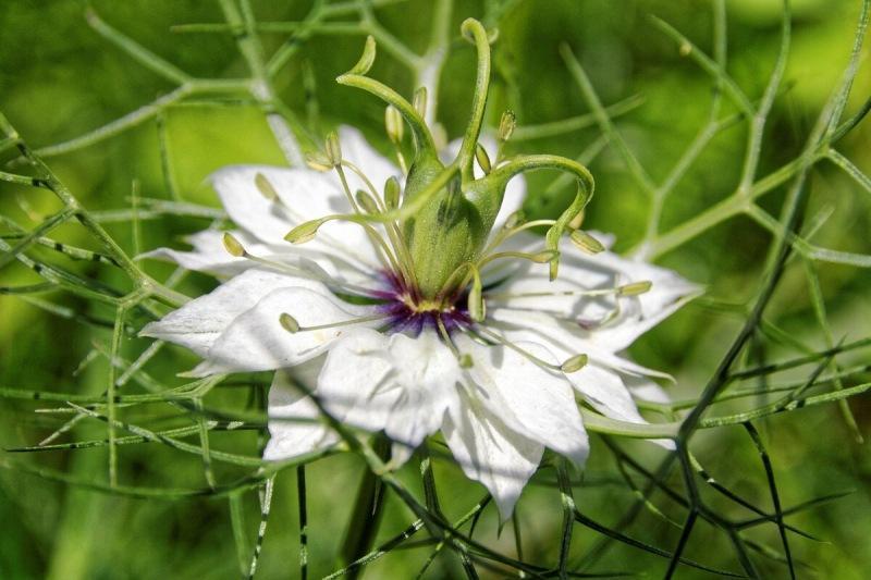 Цветы, которые можно сеять в открытый грунт