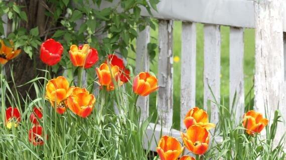 Как высадить луковичные: простые и эффектные способы посадки