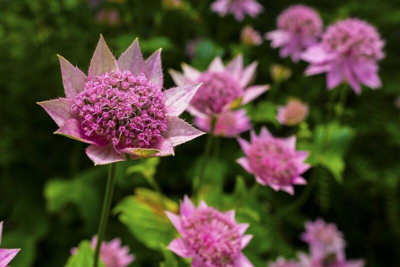 Подборка многолетников для постоянно цветущей клумбы
