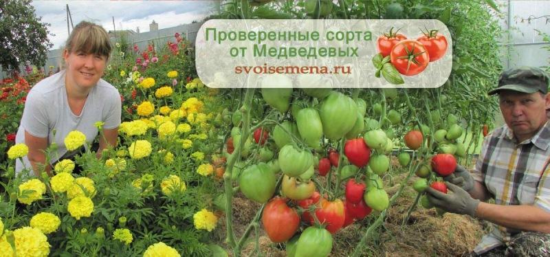 Посев Экзакума на рассаду
