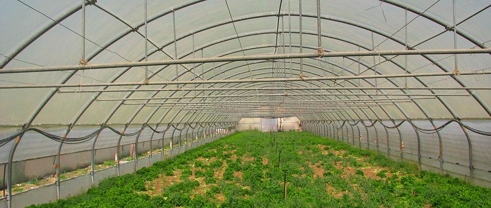 Современные теплицы - обеспечение безопасности и надлежащих условия для роста растений