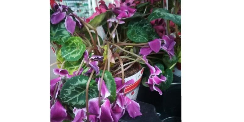 Зелёные рощи или цветы на окне. Не простой выбор