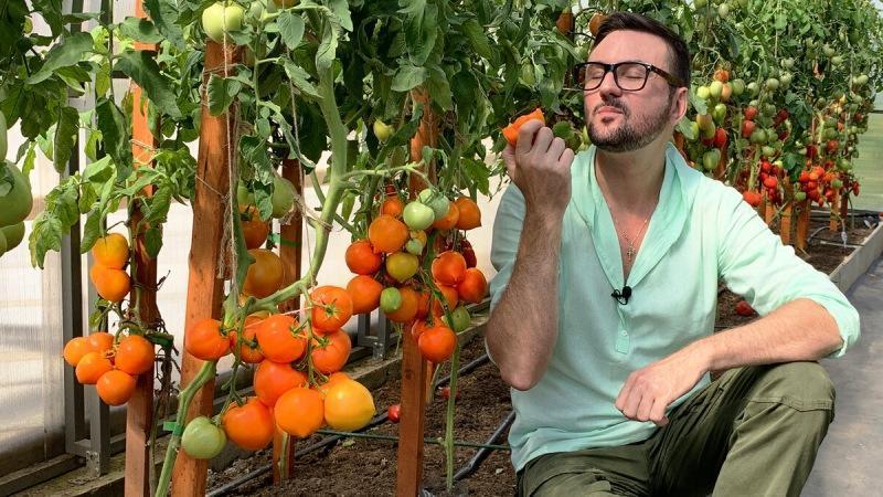 Лучшие томаты для теплицы 2021