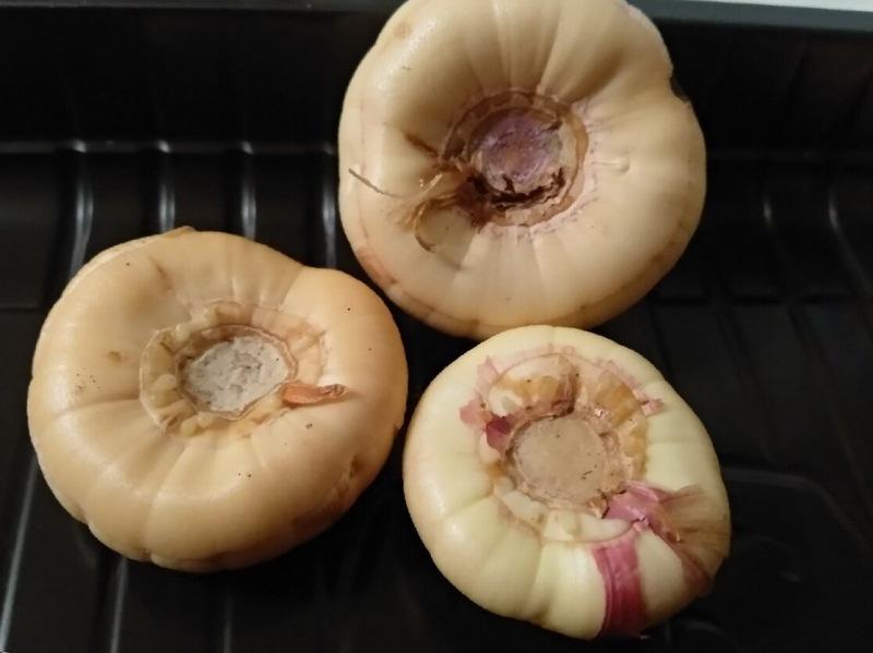 Март на календаре – наступила пора проращивания гладиолусов