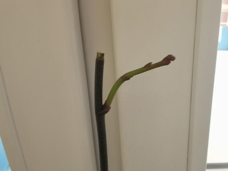 Почему все мои орхидеи растят корни и листья, а одна орхидея нет?