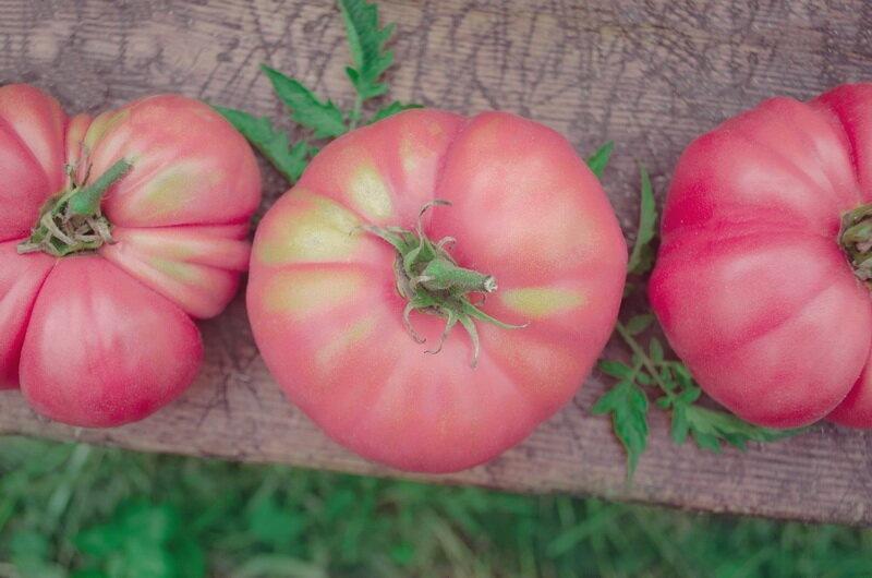 Самые популярные красные сорта помидоров