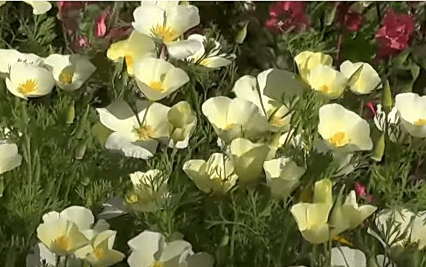 Топ 7 цветов, которые сею сразу в открытый грунт