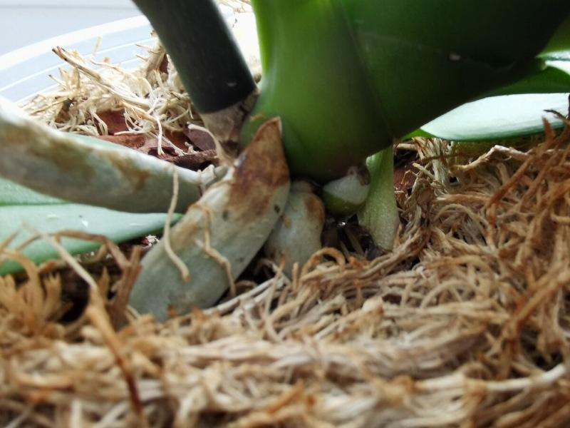 У орхидей началась весна. Что с ними происходит?