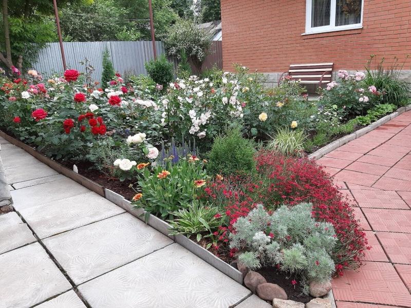Мой сад онлайн. 14.04.21. Актуальные заметки о розах