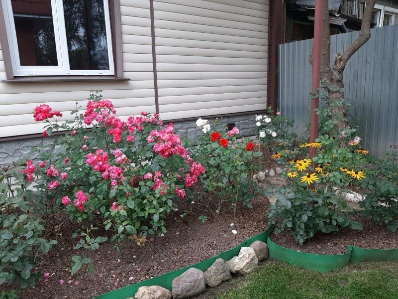 Мой сад онлайн. 7.04.21. Обрезка роз, подкормка и другие работы