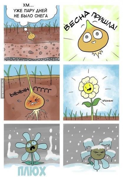 Немного цветочного юмора для поднятия настроения