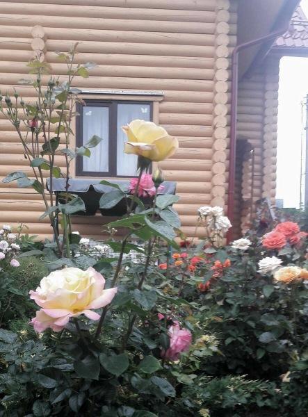 Шпаргалка по розам №4. 24 - 25 апреля 2021 г.