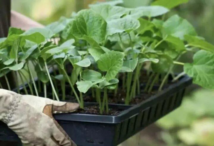Лунный календарь садово-огородных работ с 10 по 16 мая