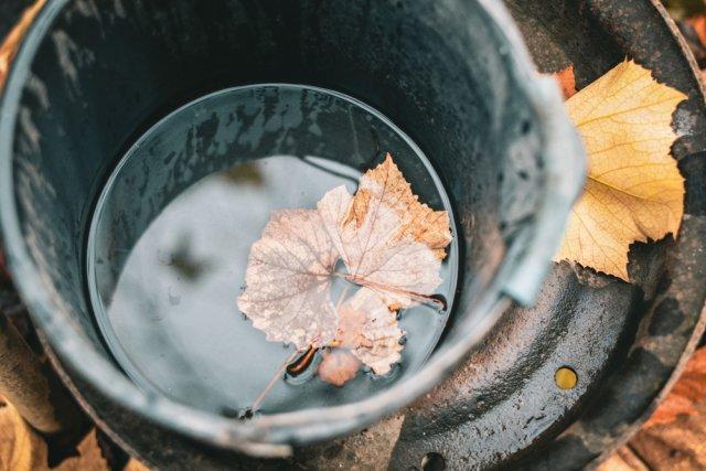 5 вещей, которые нужно сделать с виноградом в октябре