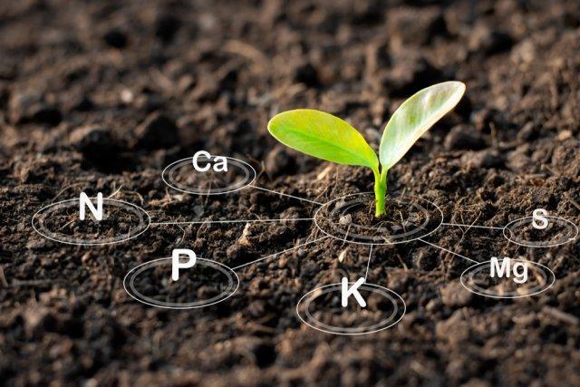 7 рецептов почвы для рассады, которые вы можете приготовить прямо сейчас