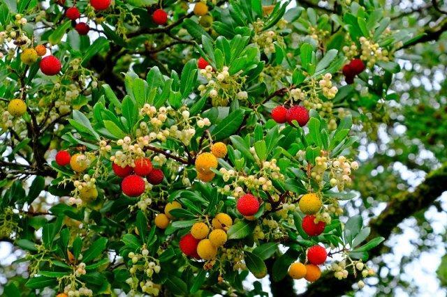 Бутылка, клубника, тюльпан и 10 других необычных деревьев мира