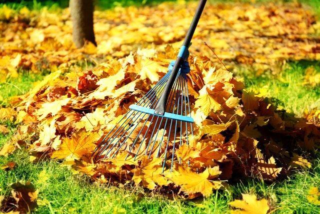 Как обработать деревья осенью от болезней и вредителей