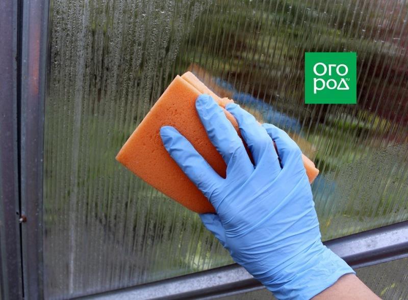 Как обработать теплицу, чтобы фитофтороз не перезимовал - советы фермера