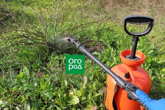 Как опрыскать деревья от вредителей осенью