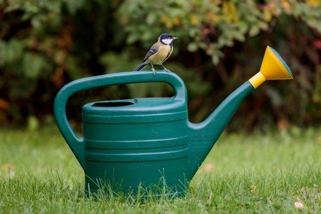 Что делать с грушей в конце лета и начале осени