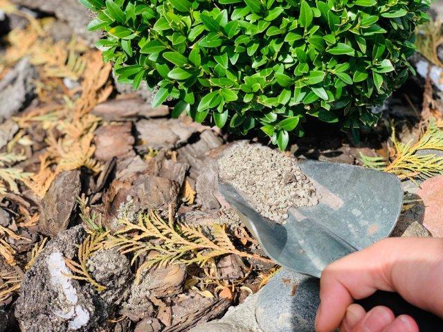 Что такое цеолит и как его использовать на даче