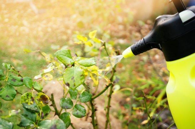 Хлороз растений – причины и лечение