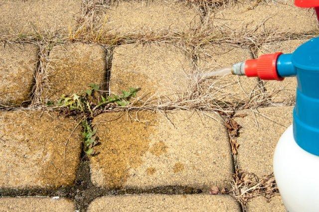 Как избавиться от сорняков на садовых дорожках
