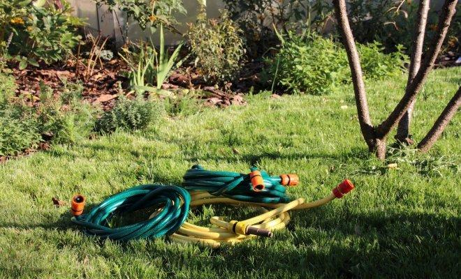 Как поливать плодовые деревья осенью: секреты полива на водной основе