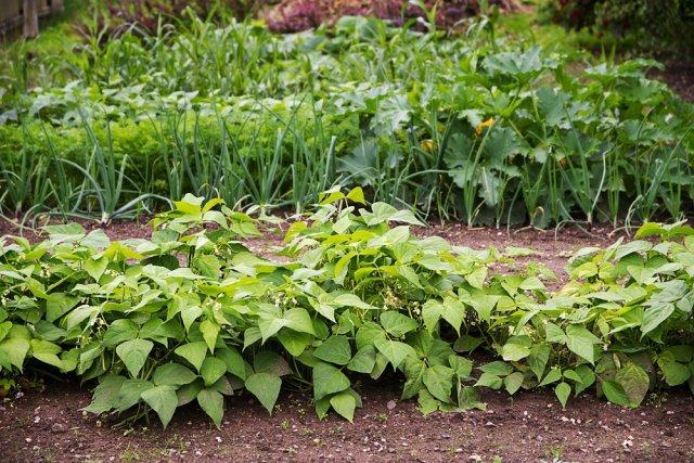 Как понять, что почва в саду устала и как с этим помочь