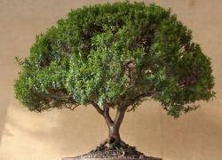 Как реанимировать деревья