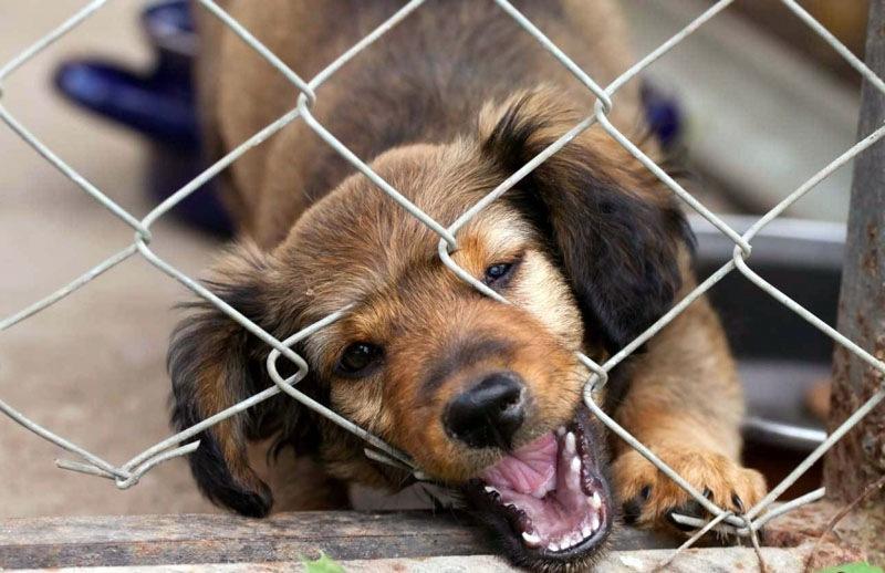 Как сделать вольер для собаки своими руками: фото и пошаговый мастер-класс