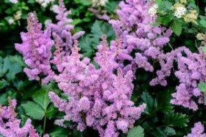 Какие цветы стоит купить и посадить в сентябре