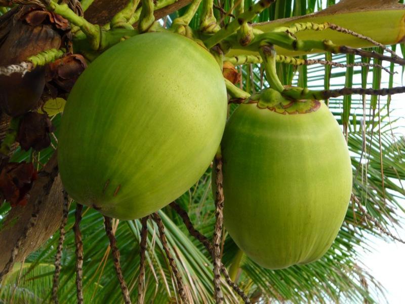 Кокос в аквариуме: идеи поделок, подготовка, обработка. Как выбрать кокос