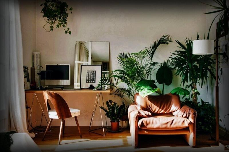 Кто бы, что не говорил, а комнатные растения и цветы обязаны быть в интерьере любой квартиры. 5 крутых экземпляров