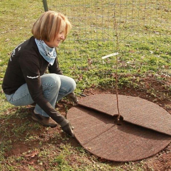 Кокосовая мульча: секреты использования современных и экологичных материалов