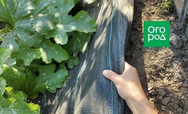 Нужно ли осенью снимать с грядок агротекстиль