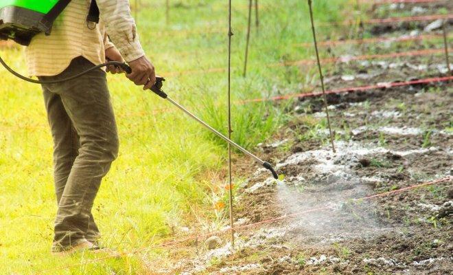 Обеззараживание почвы от грибковых инфекций