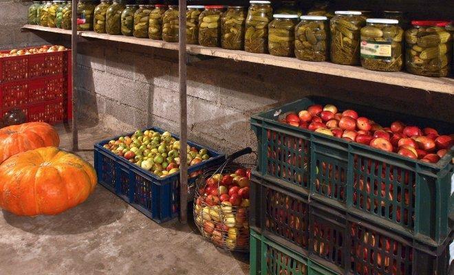 Овощи гниют в погребе: 3 простых шага для устранения проблемы