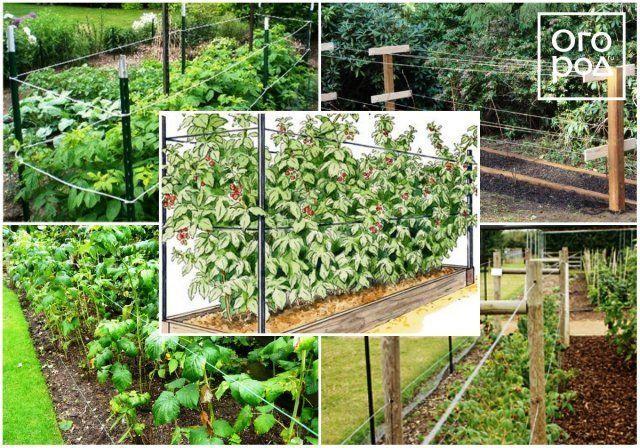 Подпорки для веток деревьев и кустов – какие бывают и как сделать самому