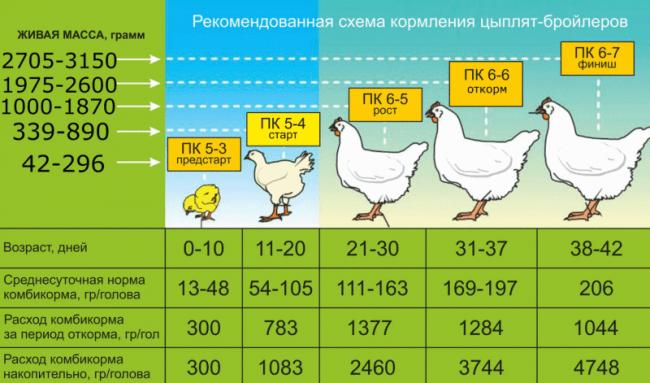 Принципы здорового питания кур