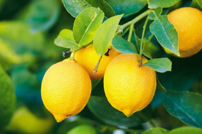 Способ консервирования лимона, которым пользуются немногие: не нужно каждый раз разрезать дольку, мазать руки соком, разделочной доской и ножом