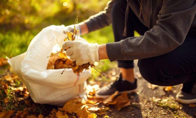 10 идей, что делать с опавшими листьями