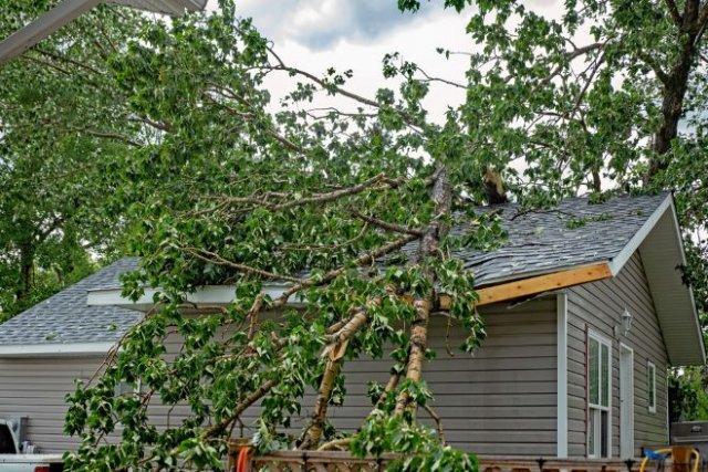 10 причин выкорчевать дерево