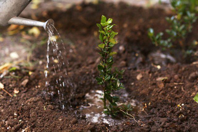 7 вещей, которые нужно делать с растениями до наступления морозов