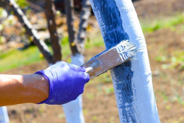 Что добавить в побелку для защиты деревьев от грызунов и болезней