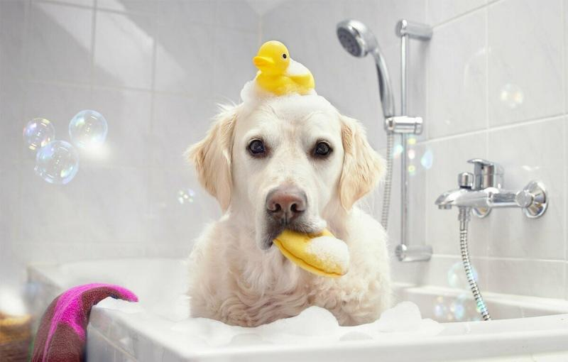 Как мыть пол собакой или кошкой