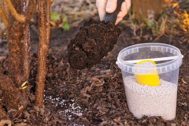 Как подготовить живую изгородь к зиме: инструкция для хвойных, лиственных деревьев и лианы