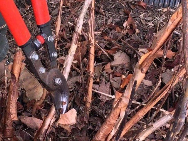 Как правильно обрезать многолетники на зиму: все тонкости осенней обрезки